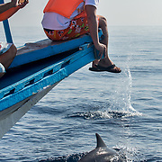 Spinner dolphins (Stenella longirostris) surfacing and blowing, Puerto Princesa, Palawan, the Philippines.