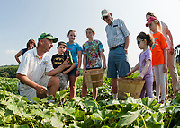 John Moulton with the Little Sprouts Garden Club get ready to pick cucumbers on Wednesday morning at Moulton Farm.  (Karen Bobotas/for the Laconia Daily Sun)