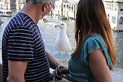 seagull posing for photo Venice Italy