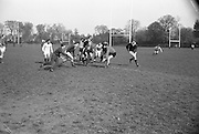 A scrum during practice, included are Sherry, Coleman, sub, McBride, Kennedy, Doyle and Murphy, Captain, .. Irish Rugby Football Union, Ireland v France, Five Nations, Irish team practice, Anglesea Road Dublin, Ireland, Friday 14th April, 1967,.14.4.1967, 4.14.1967,..Referee- R P Burrell, Scottish Rugby Union, ..Score- Ireland 6- 11 France, ..Irish Team, ..T J Kiernan,  Wearing number 15 Irish jersey, Full Back, Cork Constitution Rugby Football Club, Cork, Ireland,..R D Scott, Wearing number 14 Irish jersey, Right Wing, Queens University Rugby Football Club, Belfast, Northern Ireland, ..F P K Bresnihan, Wearing number 13 Irish jersey, Right Centre, University College Dublin Rugby Football Club, Dublin, Ireland, ..J C Walsh,  Wearing number 12 Irish jersey, Left Centre, Sundays Well Rugby Football Club, Cork, Ireland, ..N H Brophy, Wearing number 11 Irish jersey, Left wing, Blackrock College Rugby Football Club, Dublin, Ireland, ..C M H Gibson, Wearing number 10 Irish jersey, Stand Off, N.I.F.C, Rugby Football Club, Belfast, Northern Ireland, ..R M Young, Wearing number 9 Irish jersey, Scrum Half, Queens University Rugby Football Club, Belfast, Northern Ireland,..K G Goodall, Wearing number 8 Irish jersey, Forward, Newcastle University Rugby Football Club, Newcastle, England, ..M G Doyle, Wearing number 7 Irish jersey, Forward, Edinburgh Wanderers Rugby Football Club, Edinburgh, Scotland, ..N A Murphy, Wearing number 6 Irish jersey, Captain of the Irish team, Forward, Cork Constitution Rugby Football Club, Cork, Ireland,..M G Molloy, Wearing number 5 Irish jersey, Forward, University College Galway Rugby Football Club, Galway, Ireland,  ..W J McBride, Wearing number 4 Irish jersey, Forward, Ballymena Rugby Football Club, Antrim, Northern Ireland,..S A Hutton, Wearing number 3 Irish jersey, Forward, Malone Rugby Football Club, Belfast, Northern Ireland, ..K W Kennedy, Wearing number 2 Irish jersey, Forward, C I Y M S Rugby Football Club, Belfast, Northern Ireland, ..S