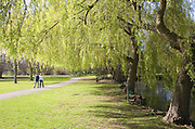 Couple walk in park past willow trees on the banks of the River Colne, Colchester, Essex, England