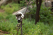 hunting trophies Baboon skulls in the Hadzabe village The Hadza, or Hadzabe, are an ethnic group in north-central tanzania, living around Lake Eyasi in the Central Rift Valley and in the neighboring Serengeti Plateau.