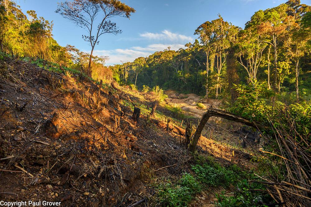 Fea0093883. DT News.The Ankeniheny-Zahamena Corridor, Madagascar.Pic Shows Tree losses Parts of the Ankeniheny-Zahamena Corridor