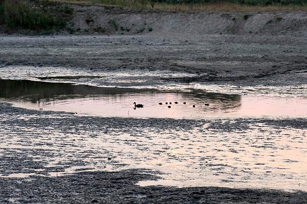Nederland, Nijmegen. 19-7-2018Drooggevallen bedding van een zijgeul van de Waal in de Ooijpolder.Door de lage waterstand is er geen aanvoer van water vanuit de rivier . Door het uitblijven van regen is de grond gebarsten.Foto: Flip Franssen