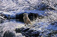 Dog resting near stream in winter in South Lake Tahoe, CA<br />