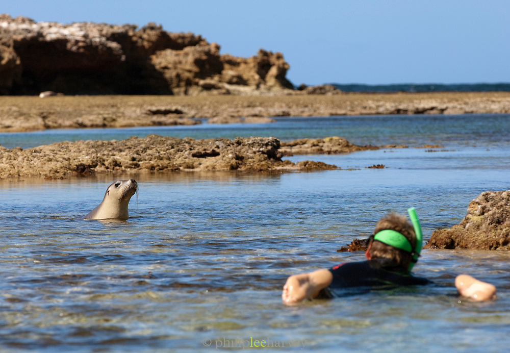 Snorkelling with Sea Lions at Baird Bay, Eyre Peninsula, South Australia, Australia