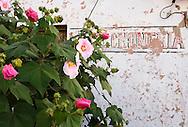 Flowers in Vinales, Pinar del Rio, Cuba.