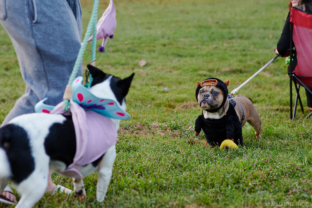 The Friends of Northwood Park host their inaugural event with a pet costume contest and screening of Secret Life of Pets.<br /> <br /> for Fairmount Park Conservancy<br /> October 8, 2021