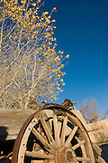 Vertical of wagon wheel and cottonwood in fall