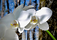 JC Pittard Orchids