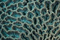 Stony coral, Scleractinia, also called hard corals, are marine animals in the phylum Cnidaria. Pak Lap Tsai, Sai Kung, Hong Kong, China.<br /> This Image is a part of the mission Wild Sea Hong Kong (Wild Wonders of China).