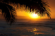 Palm tree silhouetted against the surf and setting sun on Oahu's north shore, Hawaii