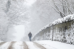 © Licensed to London News Pictures. 24/01/2021. Atherstone, Warwickshire, UK. Warwickshire covered in a blanket of snow earlier today. Pictured a walker, on Coleshill Road, Atherstone. Photo credit: Dave Warren / LNP