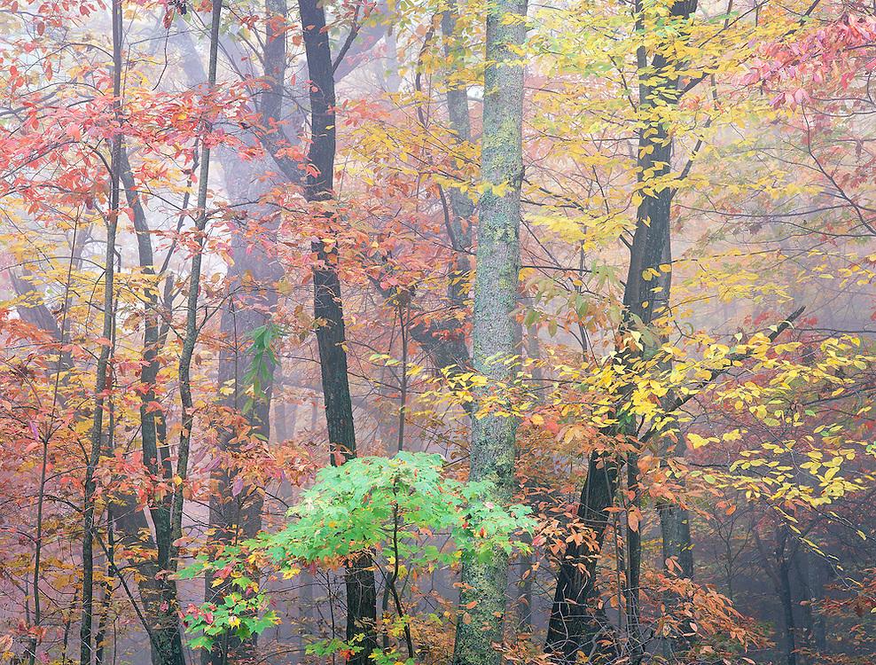 Blue Ridge Autumn Forest, North Carolina