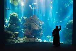 Aquarium at the Scientific Center in Kuwait City, Kuwait.
