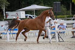 058, Mia-Amanda<br /> Nationaal Kampioenschap KWPN<br /> Gelderdse merries<br /> © Hippo Foto - Dirk Caremans<br />  15/08/2020