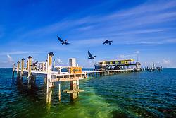 double-crested cormorant or Florida cormorant, Phalacrocorax auritus floridanus, and wood stilt house on sand banks of Safety Valve, Stiltsville, Miami, Biscayne National Park, Florida, USA, Atlantic Ocean