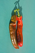 Red chilli peppers on green background
