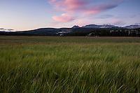 Green summer grasses of Tuolumne meadows at sunset, Yosemite national park, California, USA