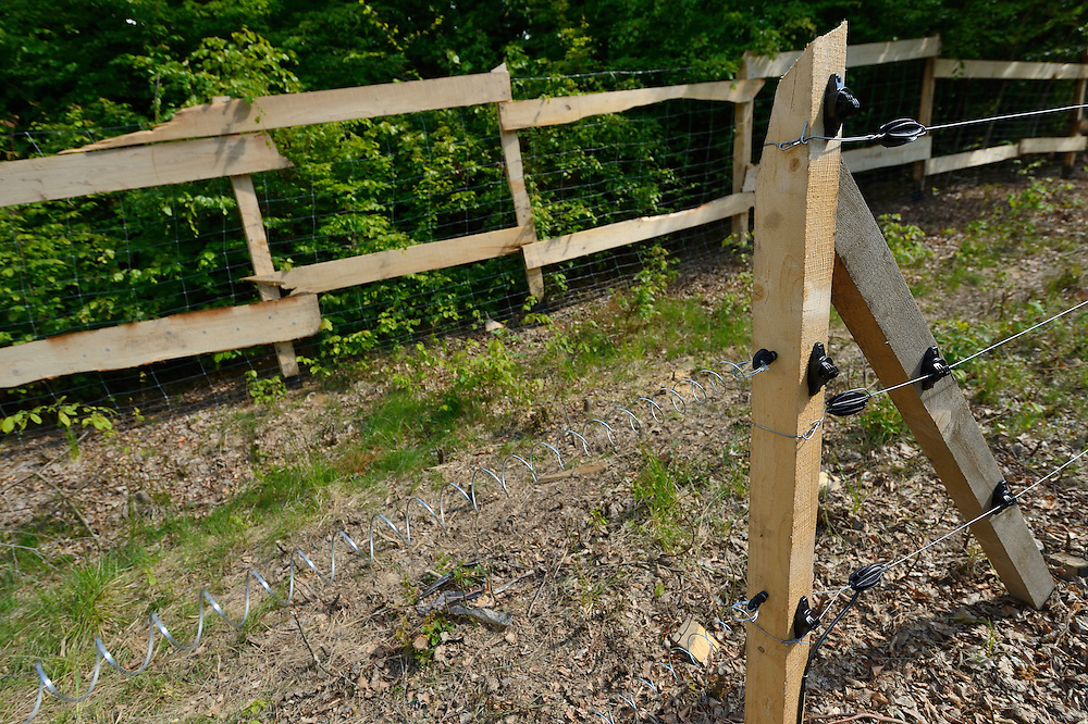 Electric fencing for the quarantine area for European bison, Bison bonasus, in the Tarcu mountains nature reserve, Natura 2000 area, Southern Carpathians, Romania. The release was actioned by Rewilding Europe and WWF Romania in May 2014.