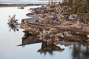 Large driftwood line the bay formed at the mouth of Kalaloch Creek, Olympic National Park, Washington.