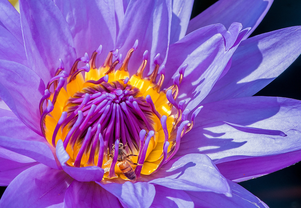 Waterlily Wonderland
