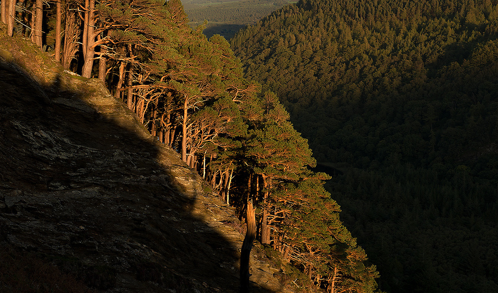 There are some spectacular trees above the upper lake in Glendalough, Co.Wicklow. Some of them are all the more spectacular in the setting sun as they line the steep hillsides.