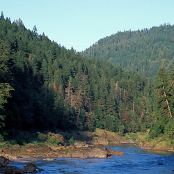 BLM Medford District, OR.Rogue River. Siskiyou Mountains. Spruce-Fir forest. June.