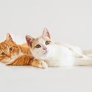 20140106 Diane Cats