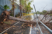 A tree crashes on the bike path along the LA River during a big rainstorm brings much needed water to the Los Angeles area on December 2, 2014. Glendale Narrows, Los Angeles, California, USA