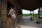 Centro ippico Pratoballino a Carnate d'Adda...Riding school Pratoballino in Carnate d'Adda