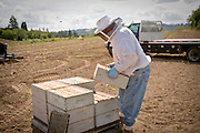 The boxes of honeycomb will be taken to the honey extractor to be processed.