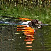 2020 WESSA Hunt Test | B Field Water 9/4/2020