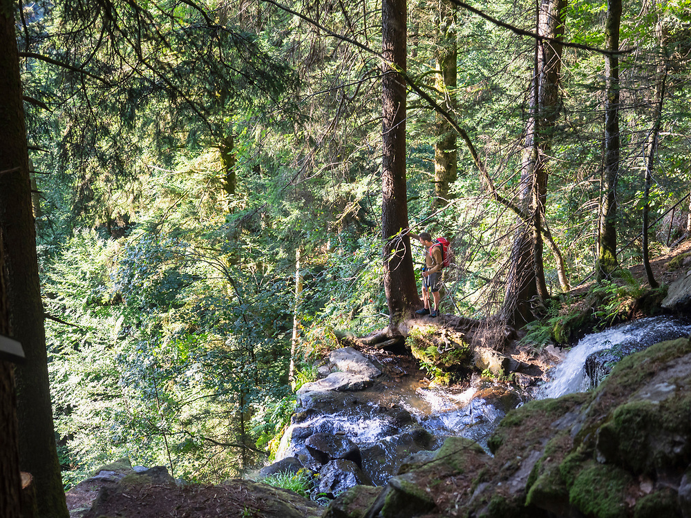 Male hiker by stream in Black Forest, Baden-Wuerttemerg, Germany