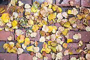 Autumn leaves on paving in the historic district of the city of Boston, Massachusetts, USA