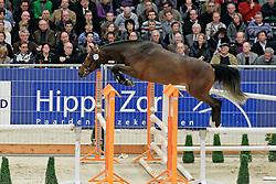 222 - Devonte<br /> KWPN hengstenkeuring 2011 - 's Hertogenbosch 2011<br /> © Dirk Caremans