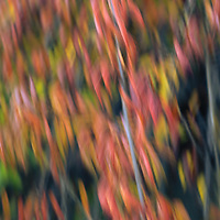 """""""Passionate""""2<br /> <br /> Colorful abstract photographic art."""