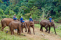 Thailande, Chiang Mai, Chiang Dao, entrainement des elephants // Thailand, Chiang Mai, Chiang Dao, elephant training