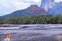 Perro dentro del río Autana, Amazonas, Venezuela.