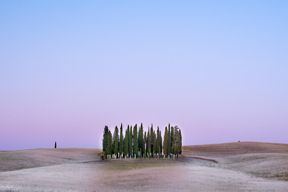 The famous cypress groove of San Quirico d'Orcia in Tuscany countryside taken after sunset