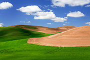 Fields in the Palouse region of eastern Washington under cumulus clouds