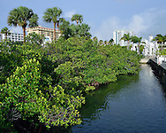Mangroves are preserved with palms and the city skyline in the background along Sarasota Bay in downtown Sarasota, Florida, USA, recently named one of America's best waterfronts to visit by USA Today.