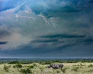 Black rhinoceros with calf under a lightning storm, which is an insignificant threat compared to poaching for their horns. [Secret location] HIGHLY ENDANGERED, © David A. Ponton