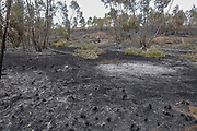 The fire damage caused by Kite bombs that were flown from Gaza with a lit petrol soaked cloth, to set fires to Israeli fields and crops. Photographed on May 05, 2018