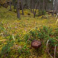Mushrooms poke through a mossy florest floor.