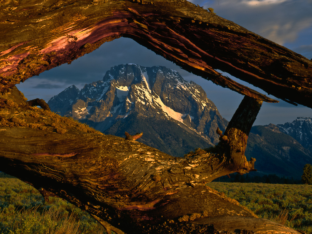 Mount Moran viewed through a weathered snag, morning light, August, Grand Teton National Park, Wyoming, USA