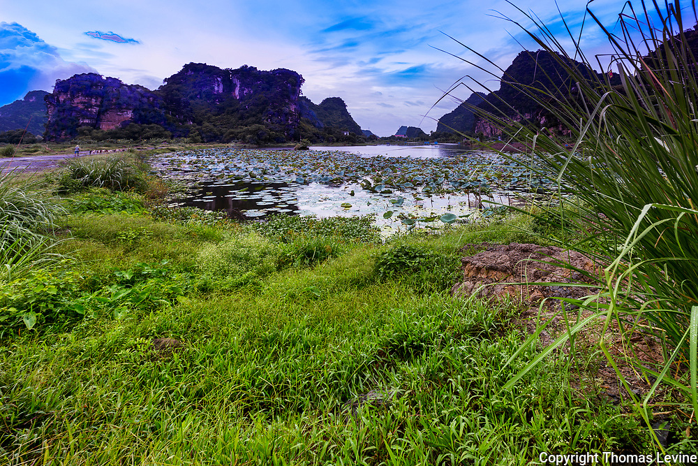 A narrow dirt road on the left with goats and its herder in a rural meadow in Ninh Binh. Providence, Vietnam.
