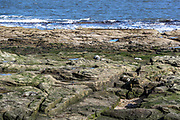 Seals are seen sunbathing around the Lighthouse tower of St. Mary's Island on Wednesday, March 17, 2021 - which is a small sandstone island near the seaside resort of Whitley Bay in the north of England. It is a Local Nature Reserve. Located in the seaside town on the northeast coast of England, it is administered as part of the borough of North Tyneside in Tyne and Wear. (Photo/ Vudi Xhymshiti)