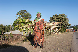 Portrait of woman carrying sugarcane while standing on dirt path