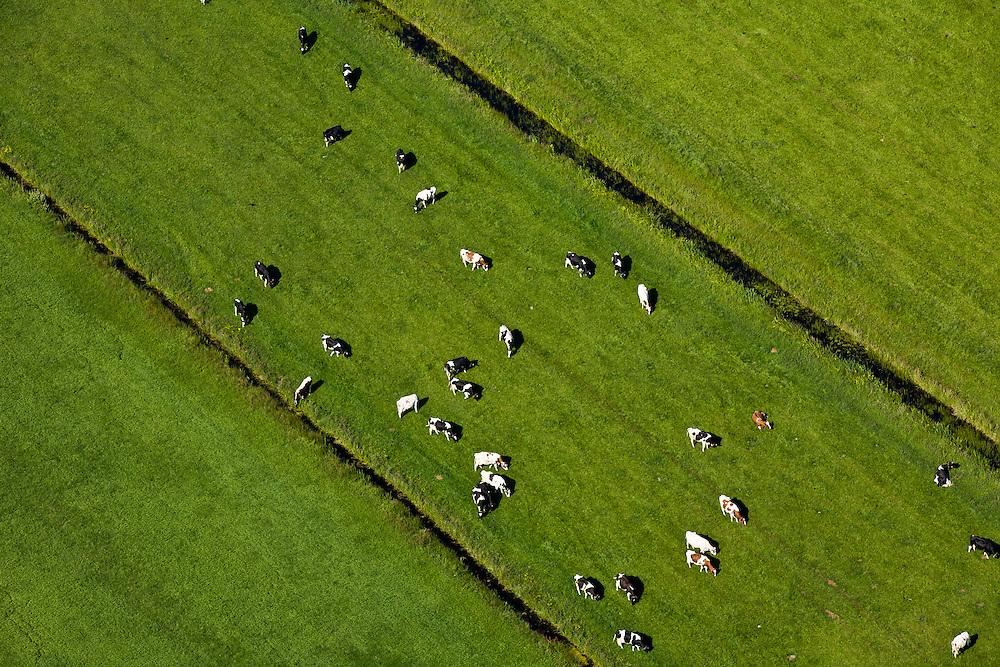 Nederland, Utrecht, Gemeente Maartensdijk, 23-06-2010; Polder Achttienhoven, omgeving Westbroek. Koeien in het voorjaar in het weiland.Cows in the spring in the meadow..luchtfoto (toeslag), aerial photo (additional fee required).foto/photo Siebe Swart